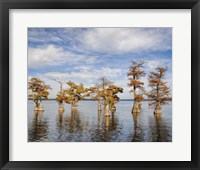 Framed Through The Cypress Garden