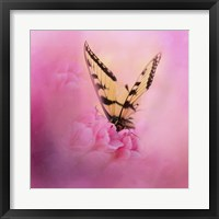 Framed Butterfly On The Azaleas