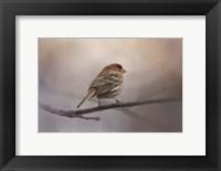 Framed House Finch In January