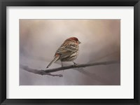 Framed House Finch In January