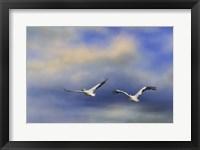 Framed Pelicans At Sea