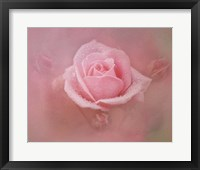 Framed Pink Rose After The Storm
