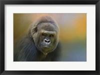 Framed Portrait Of A Gorilla