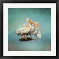 Framed We Are Family White Pelicans