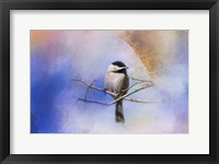 Framed Winter Morning Chickadee