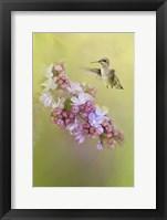 Framed Chasing Lilacs