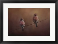 Framed Pair Of Finches