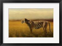 Framed Tiger In The Golden Field