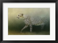 Framed Cheetah On The Prowl