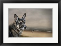 Framed German Shepherd Dreaming Of The Beach