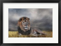 Framed Lion Waiting For The Storm