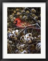Framed Cardinal & Thistles