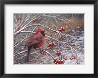 Framed Cardinal and Berries