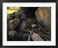 Framed Ruffed Grouse & Trout Lilies