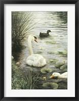 Framed In The Pond