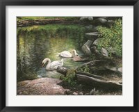 Framed Swan Song