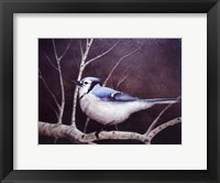 Framed Blue Jay
