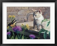 Framed Kitten & Butterfly