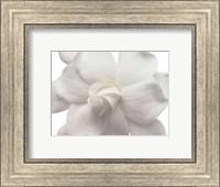 Framed Gardenia In Bloom