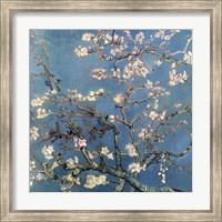 Framed Almond Blossom