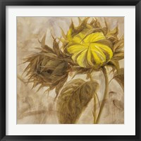 Sunflower II Framed Print
