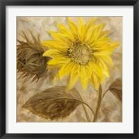 Sunflower III Framed Print
