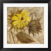 Framed Sunflower IV
