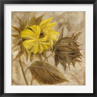 Framed Sunflower IV