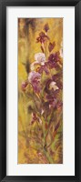Bearded Iris IV Framed Print