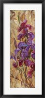 Bearded Iris V Framed Print