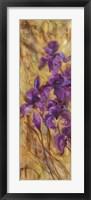 Framed Bearded Iris VII