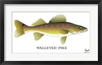 Framed Walleyed Pike
