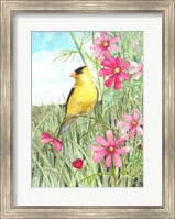 Framed Yellow Finch Cosmos