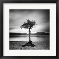 Framed Millarrochy Tree