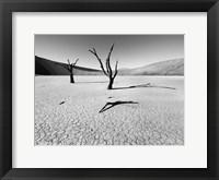 Framed Namibia Dead Vlei