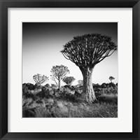 Framed Namibia Quiver Trees