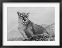 Framed Cougar Study