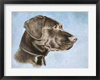 Framed Chocolate Lab