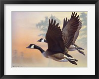 Framed Canada Geese