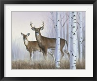 Framed Deer In Birch Woods