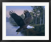 Framed Eagle Soaring