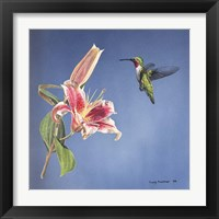 Framed Hummingbird And Lily