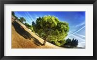 Framed Summer Tree
