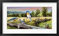 Framed Bluebird Meadow