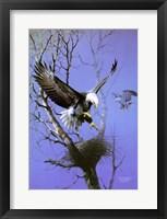 Framed Nesting Place