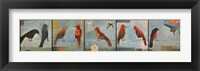 Framed Birds Know Series