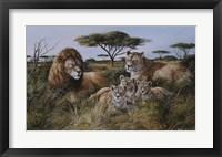 Framed Lion Family