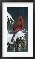 Framed Winter Cardinal