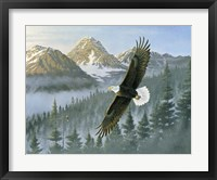 Framed Soaring Eagle