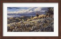 Framed King Of The Hill - Elk